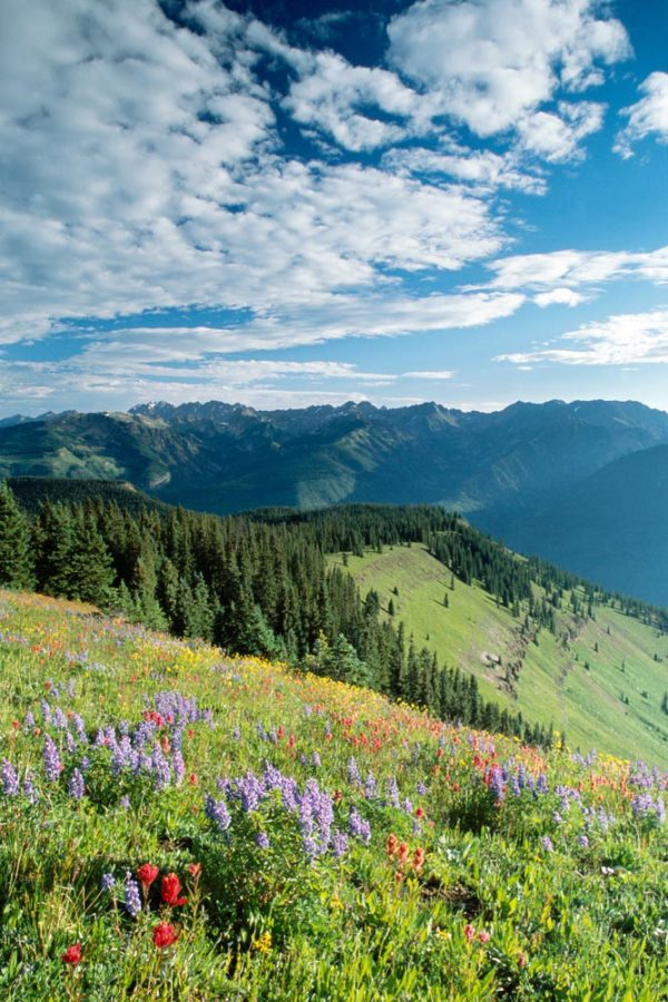 Meadow - Vail